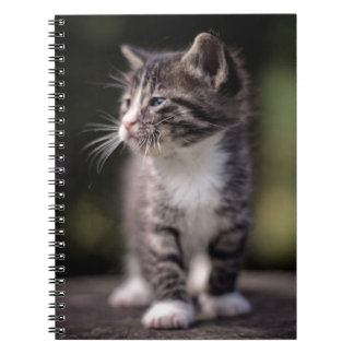 Kitten standing and squinting notebook