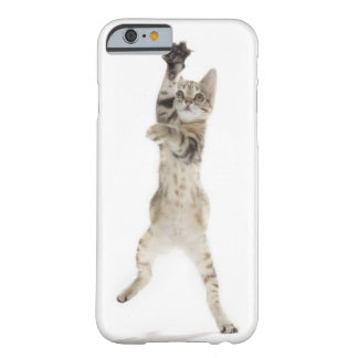 Kitten standing on back paws barely there iPhone 6 case