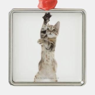 Kitten standing on back paws christmas ornament