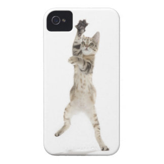 Kitten standing on back paws iPhone 4 case