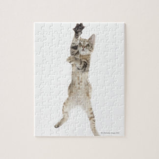 Kitten standing on back paws jigsaw puzzle
