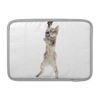 Kitten standing on back paws MacBook sleeve