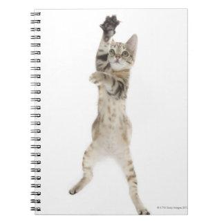 Kitten standing on back paws notebooks