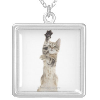 Kitten standing on back paws silver plated necklace