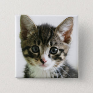 Kitten Stare 15 Cm Square Badge