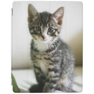 Kitten Stare iPad Cover