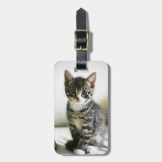Kitten Stare Luggage Tag