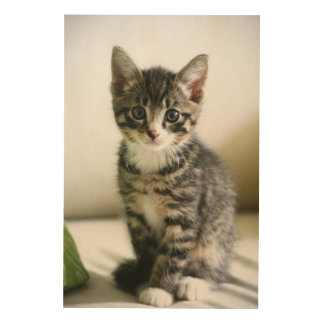 Kitten Stare Wood Canvases
