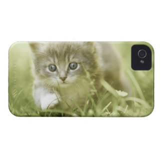 Kitten taking steps in the grass iPhone 4 cover