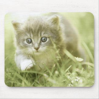 Kitten taking steps in the grass mouse mat