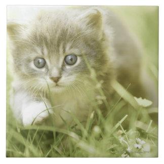 Kitten taking steps in the grass tile