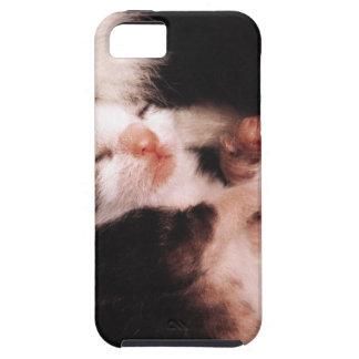 kitten tough iPhone 5 case