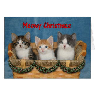 Kitten Trio - Meowy Christmas Card