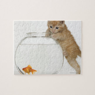 Kitten trying to get at a goldfish jigsaw puzzle