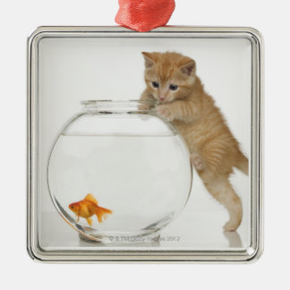 Kitten trying to get at a goldfish Silver-Colored square decoration