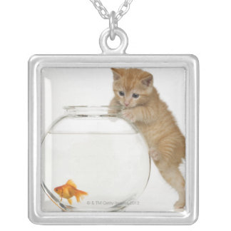 Kitten trying to get at a goldfish silver plated necklace