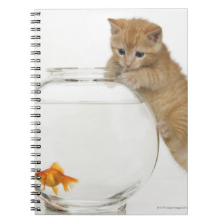 Kitten trying to get at a goldfish spiral notebook
