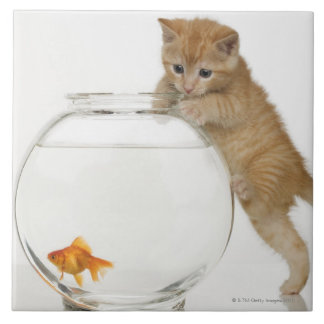 Kitten trying to get at a goldfish tile