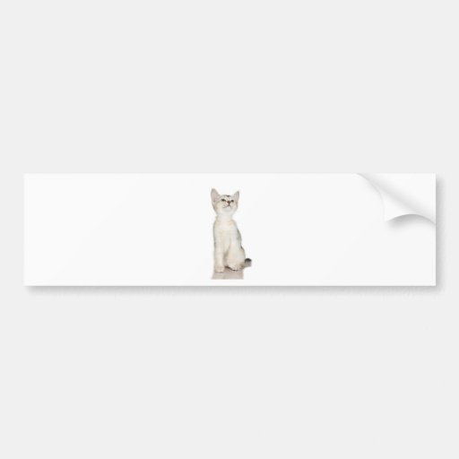 Kitten Tshirts and Gifts 235 Bumper Sticker