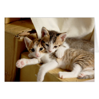 Kitten Twins Blank Greeting Card