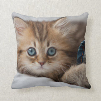 Kitten With Blue Eyes Playing Cushion