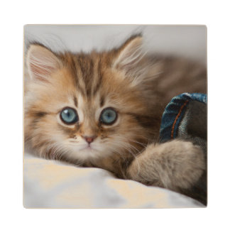 Kitten With Blue Eyes Playing Wood Coaster