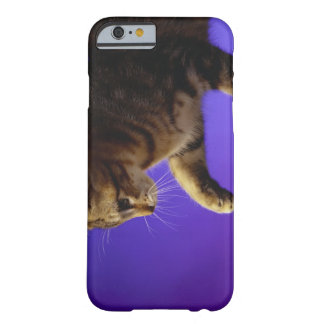 Kitten with computer mouse barely there iPhone 6 case