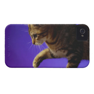 Kitten with computer mouse iPhone 4 cover