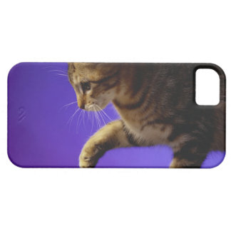 Kitten with computer mouse iPhone 5 covers