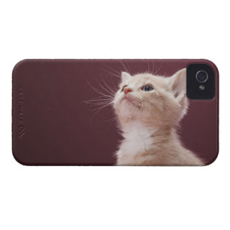 Kitten with Whiskers Case-Mate iPhone 4 Case