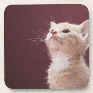 Kitten with Whiskers Coaster