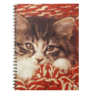 Kitten wrapped in woollen blanket, close-up spiral notebook