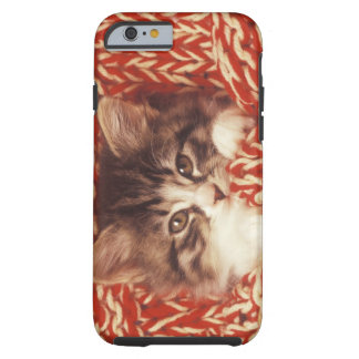 Kitten wrapped in woollen blanket, close-up tough iPhone 6 case