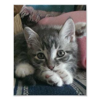 Kitten Yoga Photograph