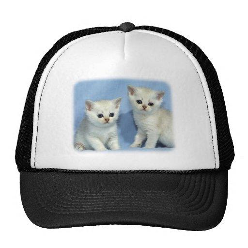 Kittens 9W054D-287 Hats