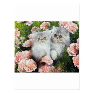 Kittens And Carnations Postcard