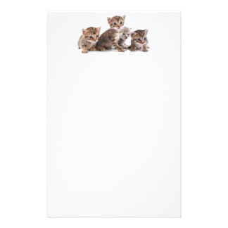 Kittens and more Kittens Stationery