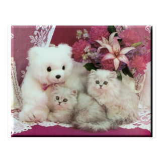 Kittens And Teddy Bear Postcard