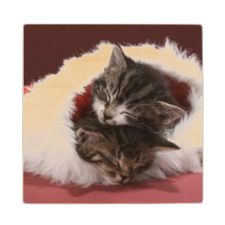 Kittens asleep together in Christmas hat Wood Coaster
