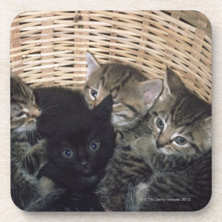kittens beverage coaster