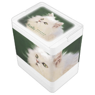 Kittens fascination igloo cool box