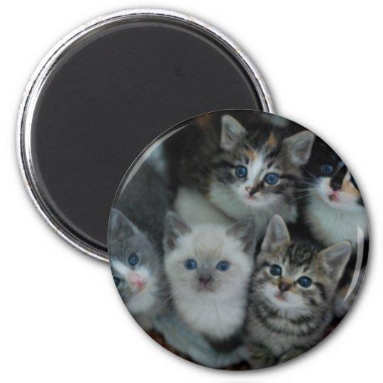 Kittens In A Basket 6 Cm Round Magnet