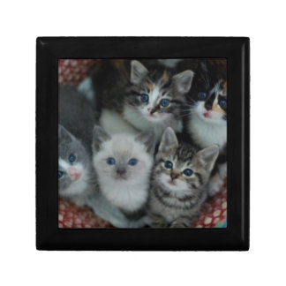 Kittens In A Basket Gift Box