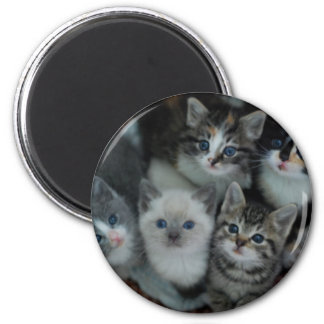 Kittens In A Basket Magnet