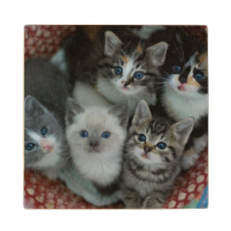 Kittens In A Basket Wood Coaster