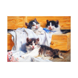 Kittens in a Drawer Stretched Canvas Print