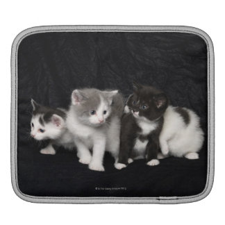 Kittens in a Studio Shot iPad Sleeves