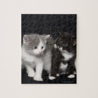 Kittens in a Studio Shot Jigsaw Puzzle