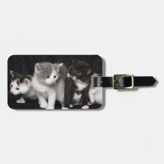 Kittens in a Studio Shot Luggage Tag