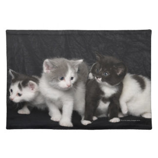 Kittens in a Studio Shot Placemat